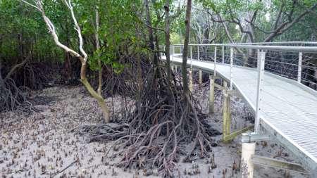 darwin mangrove ecosystem