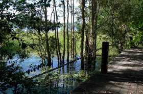 Manton Dam Walkway
