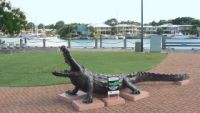 A crocodile guards Cullen Bay Marina