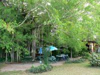Banyan Tree Kiosk