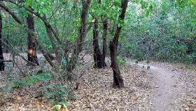 Dry bush track section
