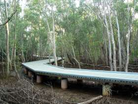 Metal walk way through the mangroves