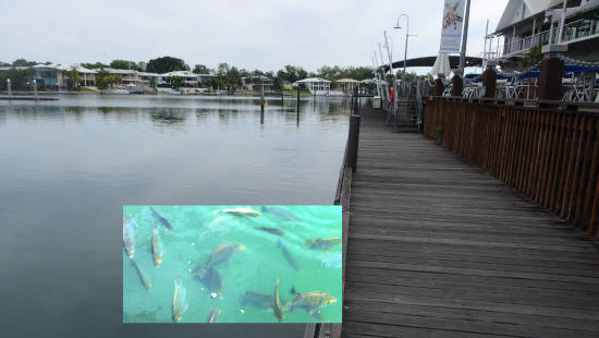 Cullen Bay Marina and Fish