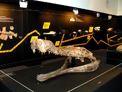 Supercroc in the evolution display at Darwin Museum