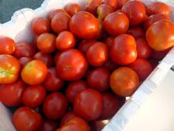 delicious tomatoes