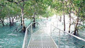 Tidal water over mangrove boardwalk