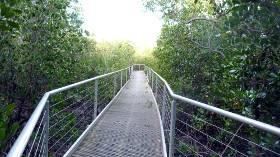 metal mangrove walkway