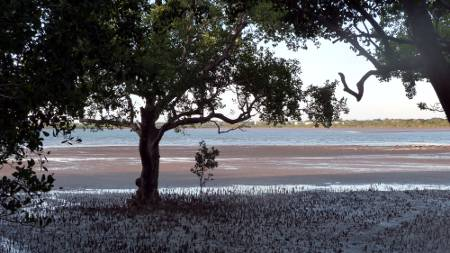Mangroves and madflats
