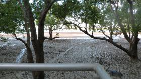 low tide in the mangroves