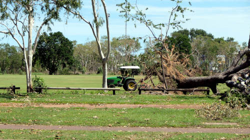 Tree felled by Cyclone Marcus 2018