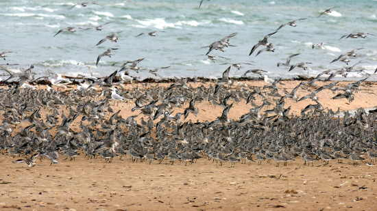 migratory birds at Buffalo Creek beach