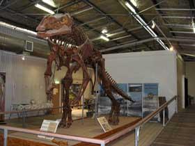 Muttaburrasaurus Hughenden