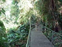 rain forest boardwalk