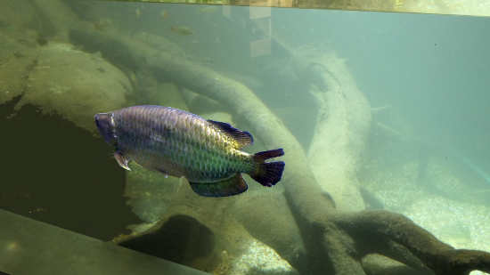 saratoga aquarium