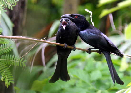 Photos of Darwin's Birds
