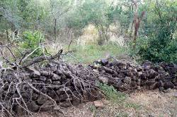 Stone fence built by early settlers in the Top End