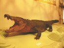 Sweetheart Crocodile Display