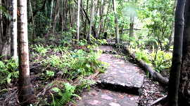 wangi path