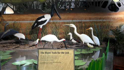 Wetlands bird display