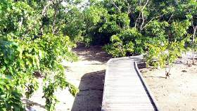 Wooden boardwalks wind over shallow water courses...