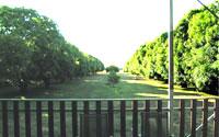 Barra Resort mango trees