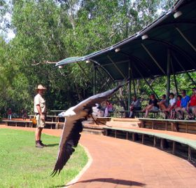 Birds of Prey Display