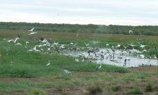 Birds at Fogg Dam