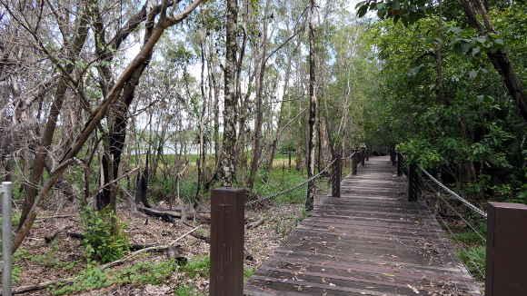 bush walk way