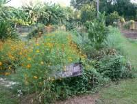 Jingili Community Gardens