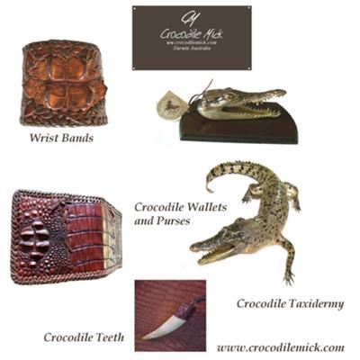 Quality Crocodile