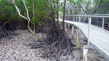Walkway over mangroves