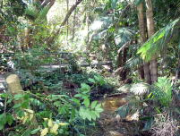 Darwin city rainforest