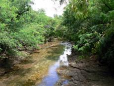 Typical Waterbird habitat
