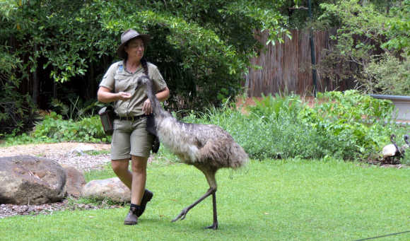 Friendly wildlife park emu