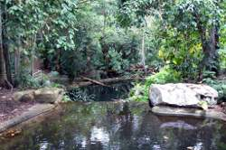 Quiet Pools and Rain Forrest