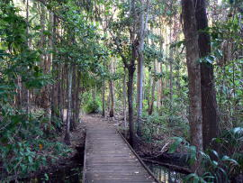 Across the stream into the rainforest.
