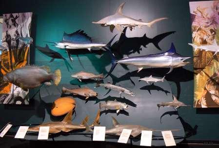 Fish Species display at museum