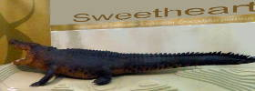Sweetheart the croc