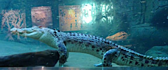 Wildlife Park Crocodile
